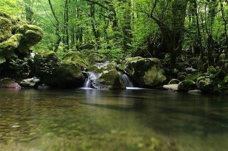 جنگل جیسا